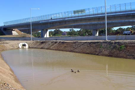 ducks swimming in a dirty pond with the Westlink M7 overhead in the background
